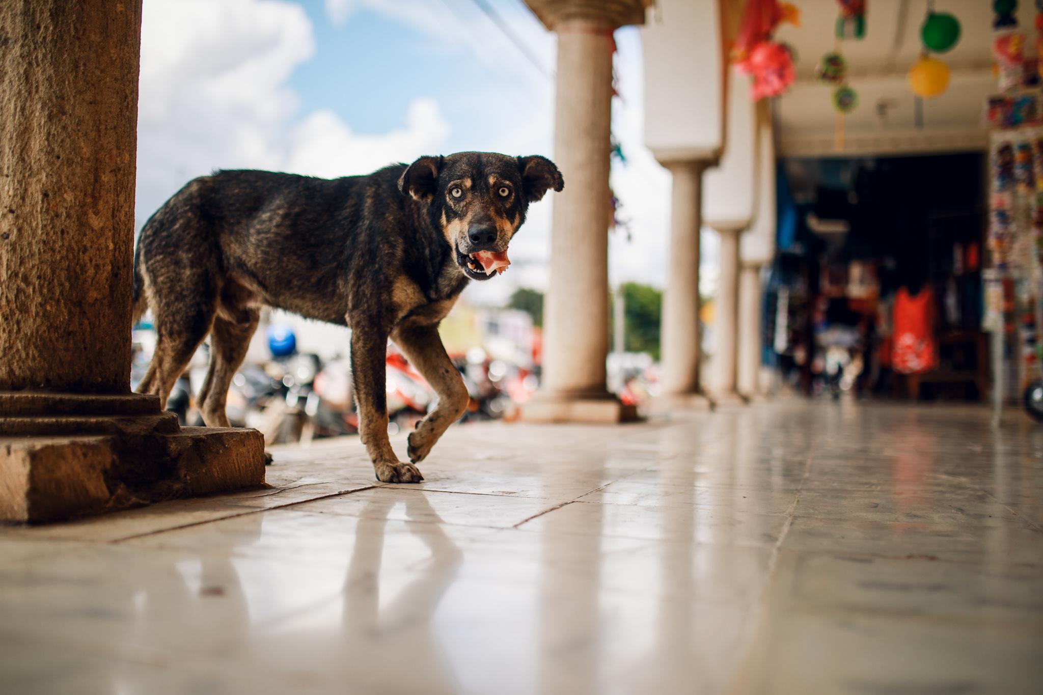 Street Animals